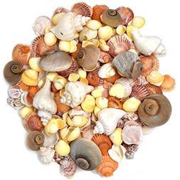 200 Sea Shells Bulk Mixed Beach Seashells - Shell in Various